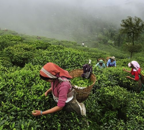 Gangtok Darjeeling Mirik Leisure Tour