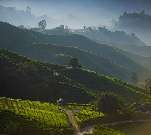 Darjeeling Mirik Lake Package